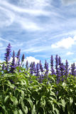 καλοκαίρι κήπων Στοκ Εικόνες