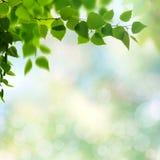 καλοκαίρι κήπων Στοκ φωτογραφίες με δικαίωμα ελεύθερης χρήσης