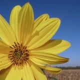 καλοκαίρι κίτρινο στοκ εικόνες
