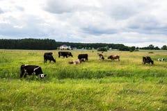 καλοκαίρι λιβαδιού αγ&epsilo Στοκ Φωτογραφίες