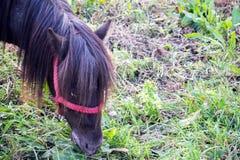 καλοκαίρι λιβαδιού αλό&gamm Λιβάδι αλόγων στο λιβάδι Στοκ φωτογραφία με δικαίωμα ελεύθερης χρήσης