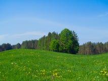καλοκαίρι λιβαδιών Στοκ εικόνες με δικαίωμα ελεύθερης χρήσης