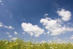 καλοκαίρι λιβαδιών Στοκ φωτογραφία με δικαίωμα ελεύθερης χρήσης