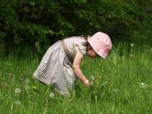 καλοκαίρι λουλουδιών Στοκ φωτογραφίες με δικαίωμα ελεύθερης χρήσης