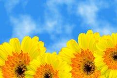 καλοκαίρι ουρανού gerbera κάτω Στοκ εικόνα με δικαίωμα ελεύθερης χρήσης