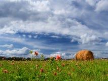καλοκαίρι πεδίων Στοκ φωτογραφία με δικαίωμα ελεύθερης χρήσης