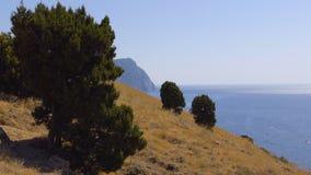 καλοκαίρι πεύκων 2008 της Κριμαίας βουνών απόθεμα βίντεο