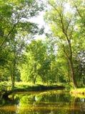 καλοκαίρι πρωινού Στοκ Φωτογραφίες