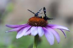 Καλοκαίρι σε έναν τομέα λουλουδιών σε Badacsonors στοκ φωτογραφία με δικαίωμα ελεύθερης χρήσης
