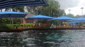 Καλοκαίρι στρατοπέδευσης παιδιών που απολαμβάνει την επίσκεψη στα δελφίνια σε Seaworld φιλμ μικρού μήκους