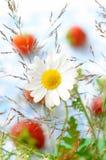 καλοκαίρι σύνθεσης στοκ εικόνα με δικαίωμα ελεύθερης χρήσης