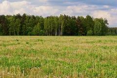 Καλοκαίρι τομέων πικραλίδων Στοκ φωτογραφία με δικαίωμα ελεύθερης χρήσης