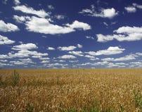 καλοκαίρι τοπίων στοκ φωτογραφία με δικαίωμα ελεύθερης χρήσης