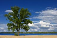καλοκαίρι τοπίων στοκ εικόνα με δικαίωμα ελεύθερης χρήσης