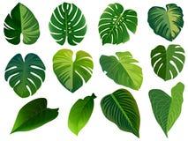 Καλοκαίρι, φύλλα άνοιξης καθορισμένα Πράσινο επίπεδο εικονίδιο , Απομονωμένος επάνω απεικόνιση αποθεμάτων