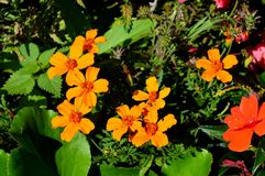 Καλοκαίρι flowers… στο πάρκο πόλεων λουλούδια φυσικά Στοκ εικόνες με δικαίωμα ελεύθερης χρήσης
