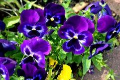 Καλοκαίρι flowers… στο πάρκο πόλεων λουλούδια φυσικά Στοκ Εικόνες
