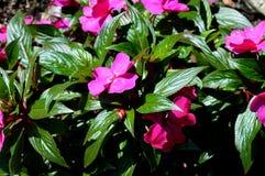Καλοκαίρι flowers… στο πάρκο πόλεων λουλούδια φυσικά Στοκ Φωτογραφίες