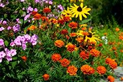 Καλοκαίρι flowers… στο πάρκο πόλεων λουλούδια φυσικά Στοκ φωτογραφίες με δικαίωμα ελεύθερης χρήσης