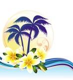 καλοκαίρι frangipani ανασκόπησης απεικόνιση αποθεμάτων