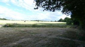Καλοκαίρι Solstice, μακριές ημέρες και ηλιόλουστος καυτός καιρός στην Αγγλία 18 στοκ εικόνα