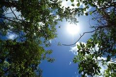 καλοκαίρι soltice στοκ φωτογραφία με δικαίωμα ελεύθερης χρήσης