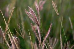 Καλοκαιρινές διακοπές λιβαδιών τομέων paragrass στοκ φωτογραφίες με δικαίωμα ελεύθερης χρήσης