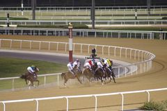 Καλπάζοντας άλογα αγώνων στον ανταγωνισμό αγώνα νύχτας στοκ εικόνες