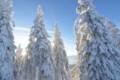 καλυμμένα δέντρα χιονιού έ&lambd Πανοραμική άποψη του γραφικού χιονώδους χειμερινού τοπίου Στοκ Εικόνες