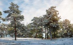 καλυμμένα δέντρα χιονιού έ&lambd Στοκ εικόνες με δικαίωμα ελεύθερης χρήσης