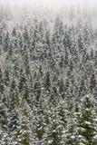 καλυμμένα δέντρα χιονιού έ&lambd Στοκ Εικόνα
