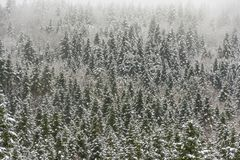 καλυμμένα δέντρα χιονιού έ&lambd Στοκ Εικόνες