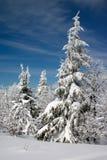 καλυμμένα δέντρα χιονιού έ&lambd Στοκ φωτογραφία με δικαίωμα ελεύθερης χρήσης