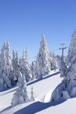 καλυμμένα δέντρα χιονιού β& Στοκ φωτογραφία με δικαίωμα ελεύθερης χρήσης