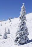 καλυμμένα δέντρα χιονιού β& Στοκ Φωτογραφίες