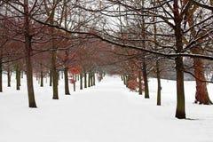 καλυμμένα δέντρα χιονιού μ&om Στοκ Εικόνα