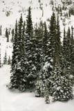 καλυμμένα δέντρα χιονιού π&e Στοκ φωτογραφίες με δικαίωμα ελεύθερης χρήσης