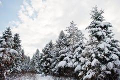καλυμμένα δέντρα χιονιού π&ep Όμορφα χειμερινά τοπία Παγετός ν Στοκ Εικόνες