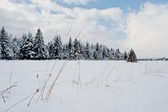καλυμμένα δέντρα χιονιού π&ep Όμορφα χειμερινά τοπία Παγετός ν Στοκ εικόνα με δικαίωμα ελεύθερης χρήσης