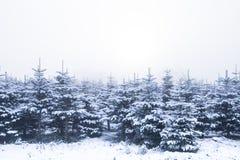 καλυμμένα δέντρα χιονιού π&ep Στοκ Εικόνα