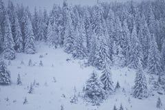 καλυμμένα δέντρα χιονιού π&ep Στοκ εικόνα με δικαίωμα ελεύθερης χρήσης