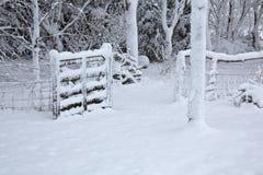 καλυμμένα δέντρα χιονιού π&up Στοκ φωτογραφίες με δικαίωμα ελεύθερης χρήσης
