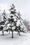 καλυμμένα δέντρα χιονιού Το δασικό πόδι τυπώνει το χειμώνα Στοκ εικόνα με δικαίωμα ελεύθερης χρήσης
