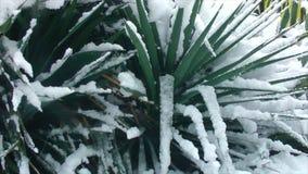 καλυμμένα δέντρα χιονιού φ&o απόθεμα βίντεο