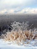 καλυμμένα ζιζάνια βουνών πά&g Στοκ εικόνες με δικαίωμα ελεύθερης χρήσης