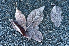 καλυμμένα φύλλα παγετού Στοκ φωτογραφία με δικαίωμα ελεύθερης χρήσης