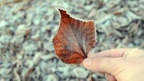 καλυμμένα φύλλα παγετού απόθεμα βίντεο