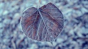 καλυμμένα φύλλα παγετού φιλμ μικρού μήκους