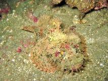 καλυμμένα ψάρια Στοκ εικόνες με δικαίωμα ελεύθερης χρήσης