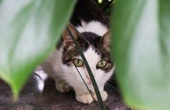 Καλυμμένη γάτα Στοκ εικόνα με δικαίωμα ελεύθερης χρήσης